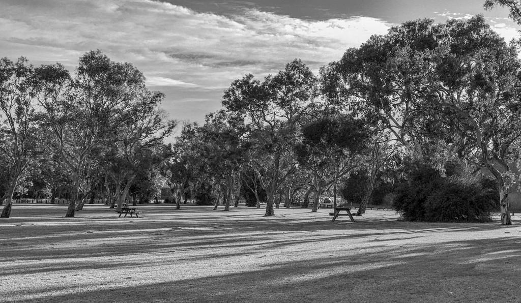 FORF19: #23 Morning light by golftragic