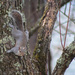 A squirrel in the tree by mittens