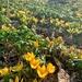 Yellow spring.