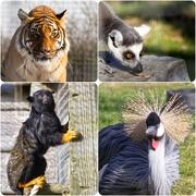 23rd Feb 2019 - Hamerton Zoo yesterday