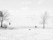 23rd Feb 2019 - Winter Day