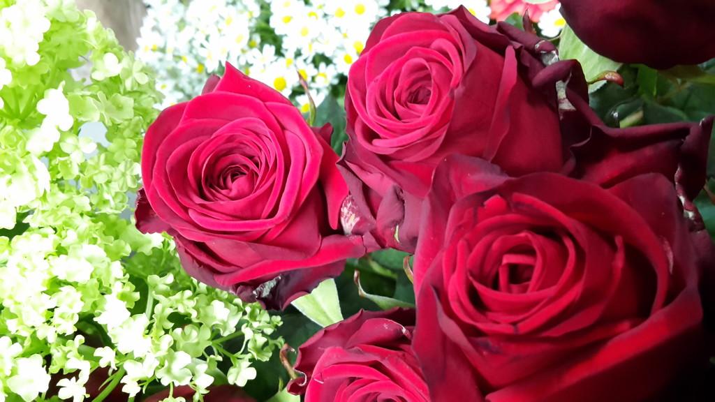 Roses by ideetje