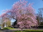 24th Feb 2019 - Blossom