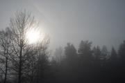 23rd Feb 2019 - Fog
