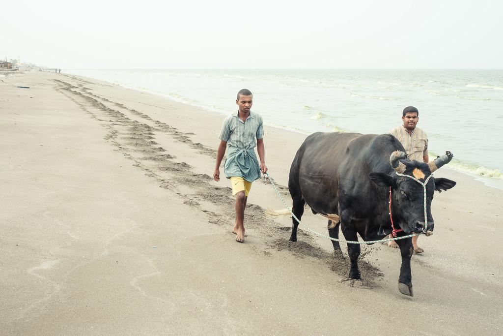 A beach stroll by stefanotrezzi