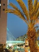 24th Feb 2019 - Jerusalem, String Bridge
