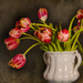 This week's tulips by jernst1779