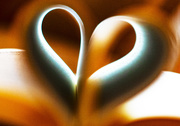 25th Feb 2019 - Abstract book heart