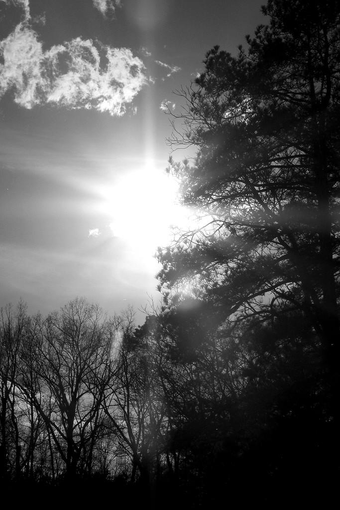 High Contrast Sunshine! by homeschoolmom
