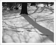 20th Feb 2019 - Tree Shadows