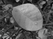 19th Feb 2019 - Leaf