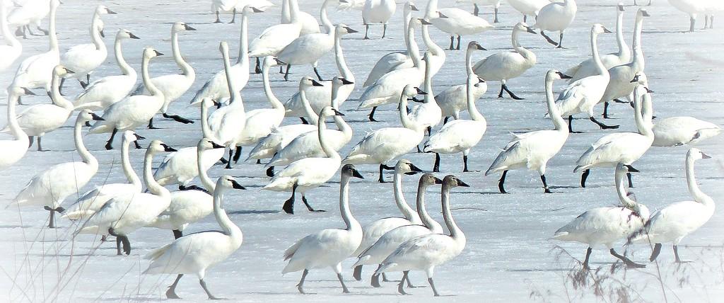 Migration by dfarrington