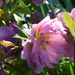 Hellebores ... by snowy