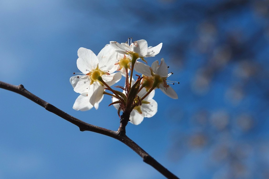 Yea for Signs of Spring by milaniet