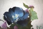 22nd Feb 2019 - Silk Flowers