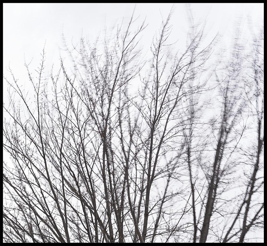 Wind by gardencat