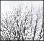 26th Feb 2019 - Wind