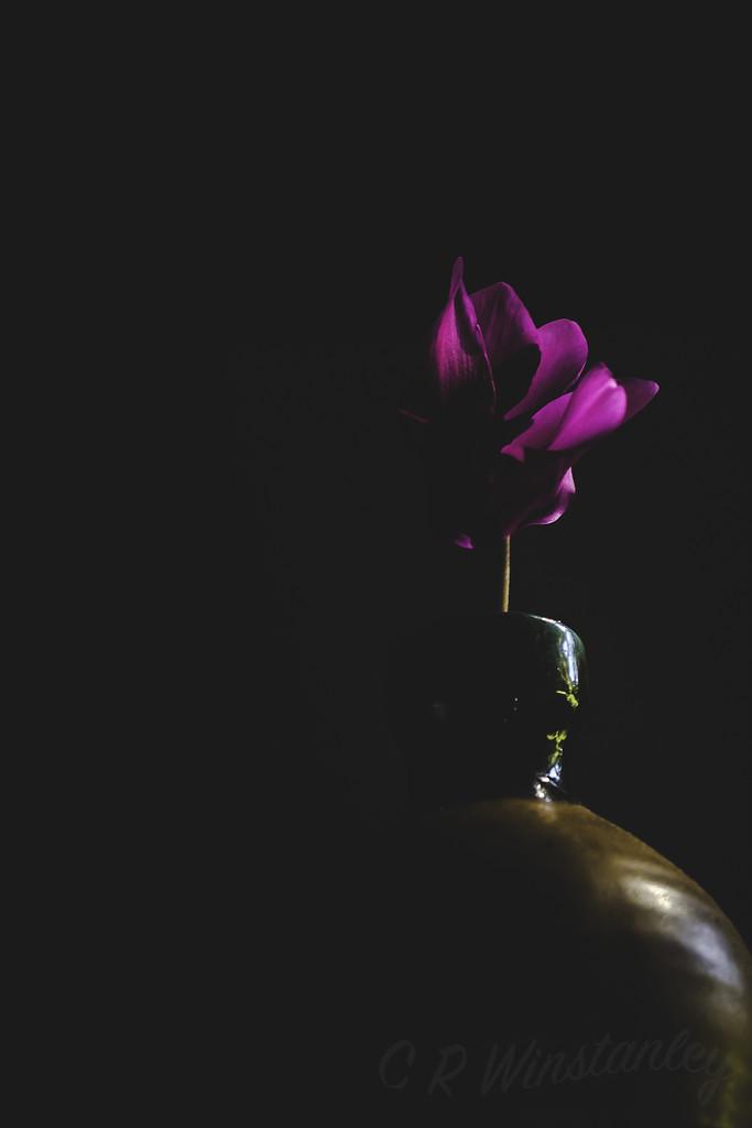 Solitary Bloom by kipper1951