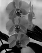 26th Feb 2019 - February 26: Orchid