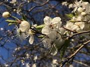 26th Feb 2019 - Spring time