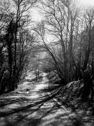 26th Feb 2019 - up to the woods