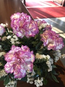 26th Feb 2019 - Carnations