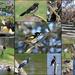 24 bird species in 2 hours