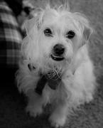 27th Feb 2019 - February 27: Casper Dog