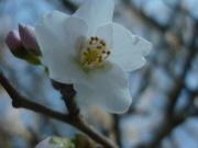27th Feb 2019 - Spring Surprises