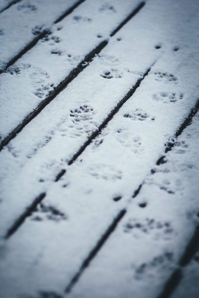 Paw Prints in the Snow by mamazuzi
