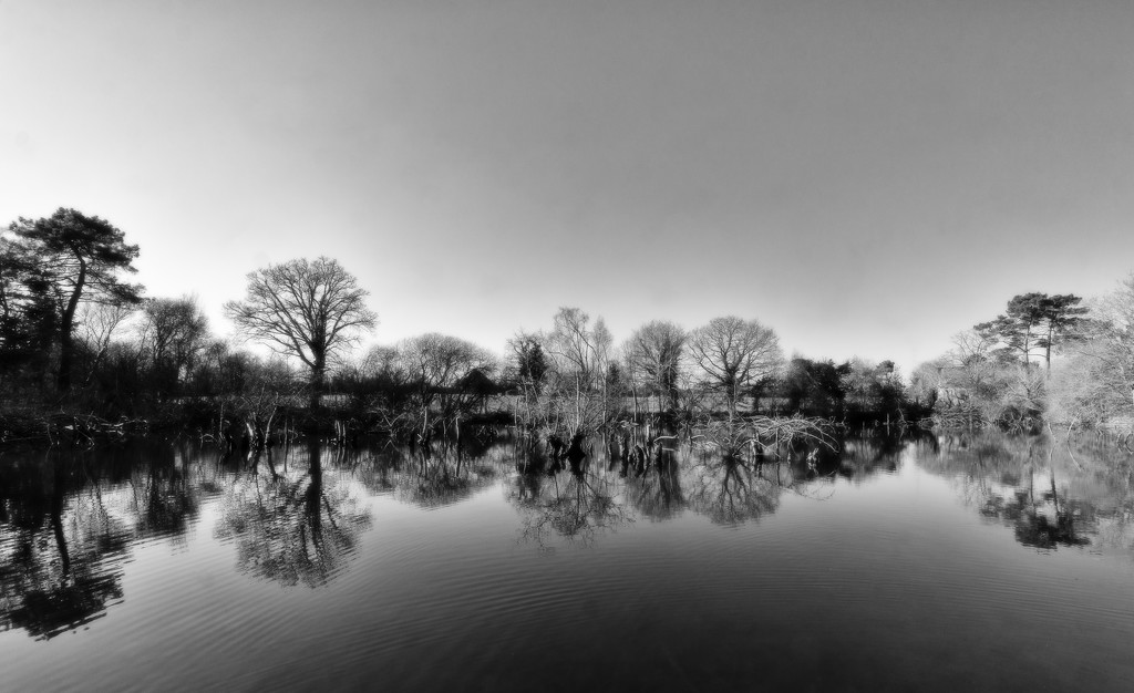 FORF27 - Contrast 3: Pond Reflections by vignouse
