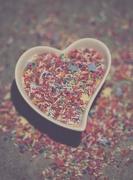 28th Feb 2019 - Sprinkle kindness...