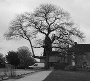 28th Feb 2019 - Contrast 4 of 4: Tree & Van (Flash of White?)
