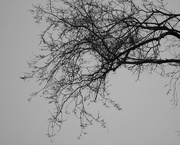 28th Feb 2019 - February 28: Branches