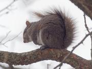 28th Feb 2019 - squirrel in a tree