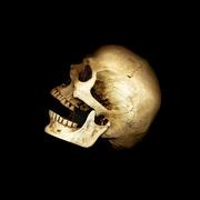28th Feb 2019 - Skull Scan