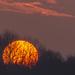 Big Sun! by rjb71
