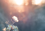 23rd Feb 2019 - weed in sunshine with bokeh sprinkles