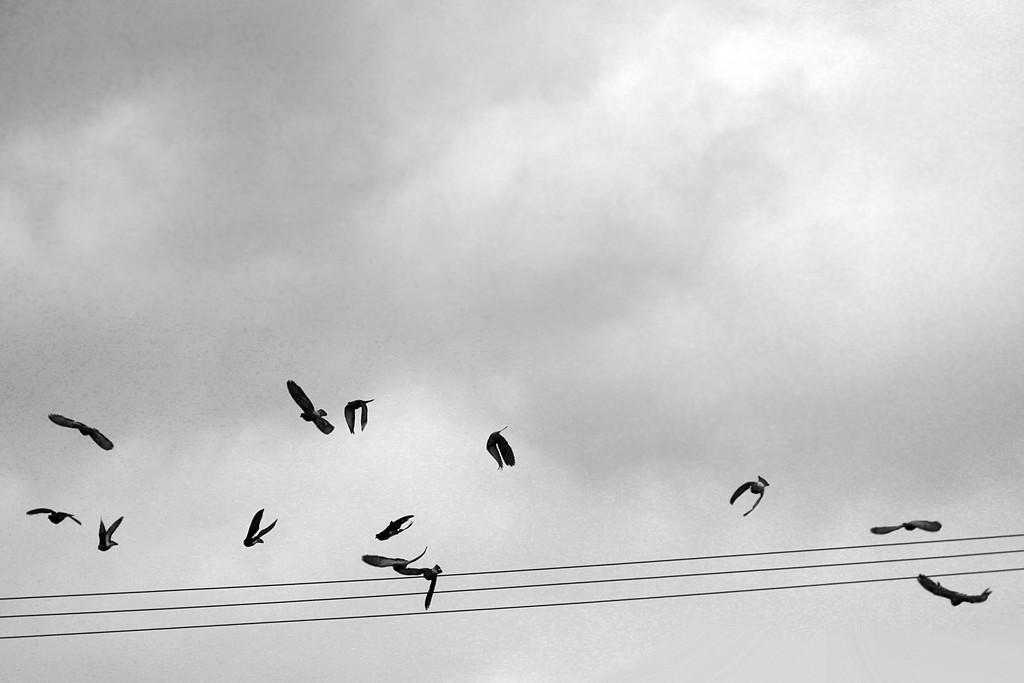 Fly Away by jaybutterfield