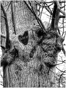28th Feb 2019 - To end the February challenge, a nice heart in a tree!