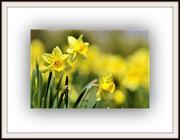 1st Mar 2019 - Dydd Gwyl Ddewi Hapus -- Happy Saint David's Day
