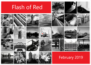 1st Mar 2019 - Flash of Red I