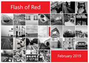 1st Mar 2019 - Flash of Red II