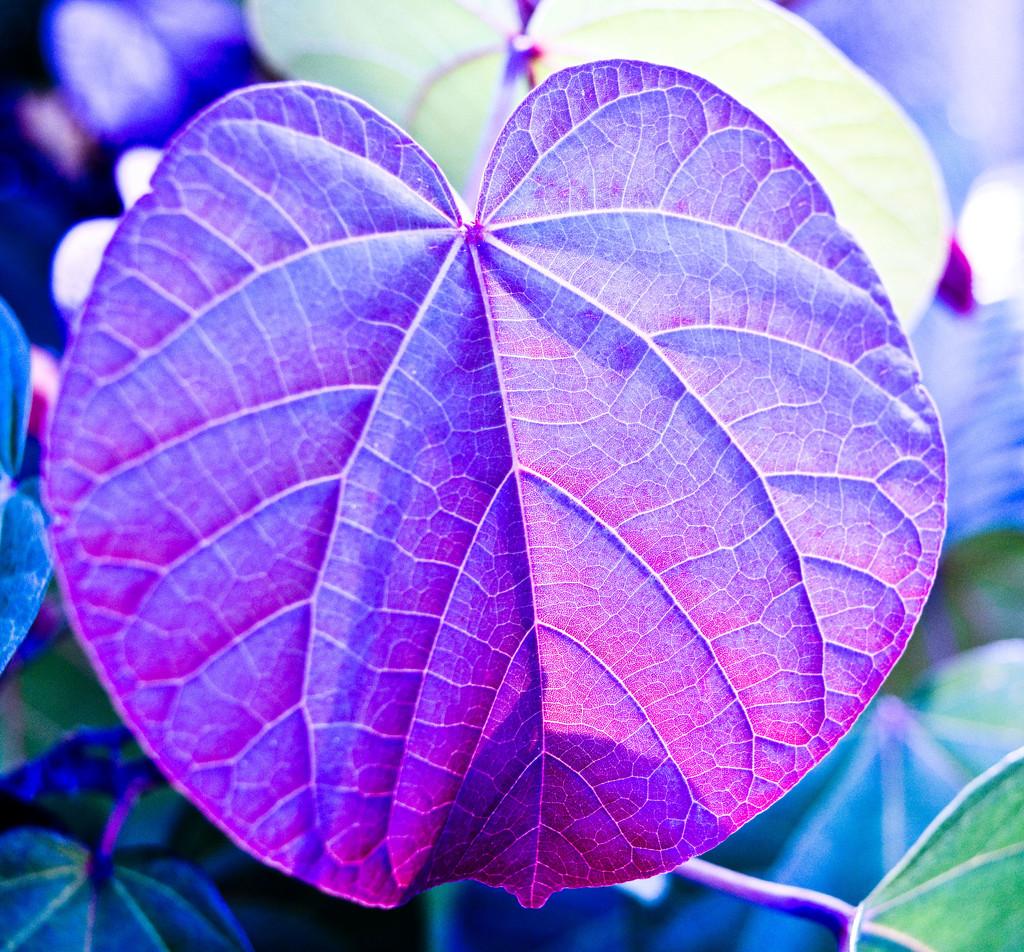 Rainbow Month - Indigo Leaf by annied