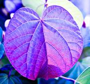 2nd Mar 2019 - Rainbow Month - Indigo Leaf