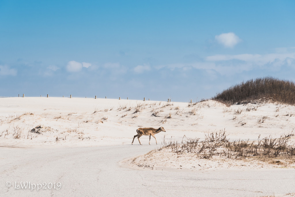 Walking The Dunes  by lesip