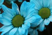 1st Mar 2019 - Blue flowers