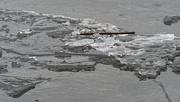 1st Mar 2019 - ice flow wide