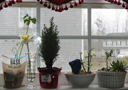 1st Mar 2019 - My window garden