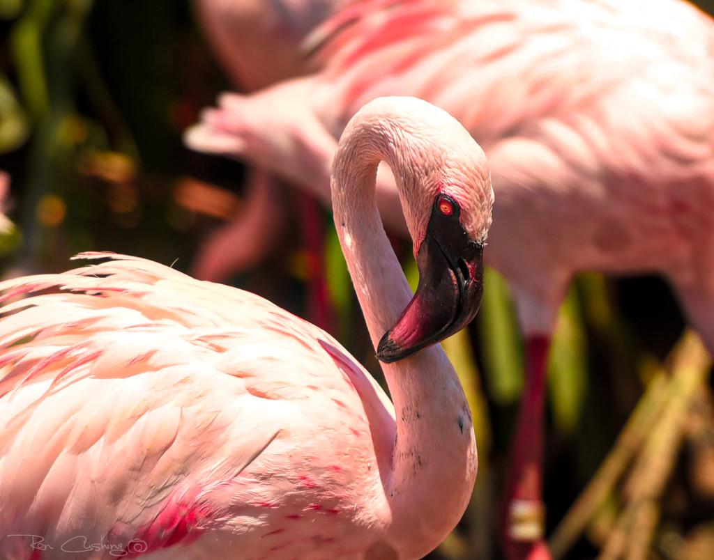 Flamingo Friday '19 10 by stray_shooter